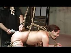 Tied Whipped And Toyed tube