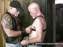 Macho daddy mac brody tubes