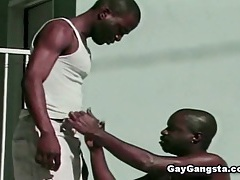 Black gays sucking dick tubes